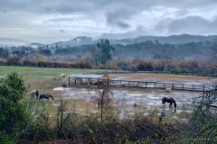 Grazing Horses in Light Rain, Santa Ana Rd